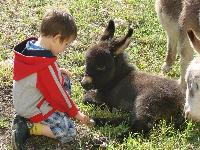 Our 1st baby of year 2009 - Spectacular Miniature donkey