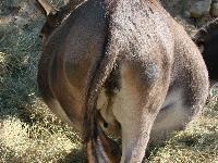 adriana sephora nude